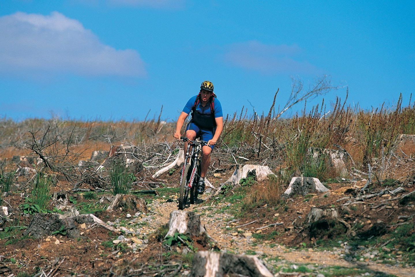 Cwmcarn mountain bike trail rider